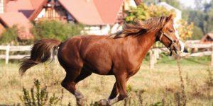 koń-1-300x150
