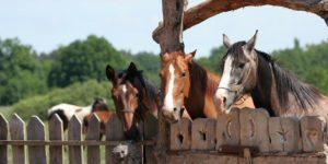 konie-300x150